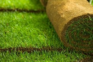 Sod Lawn Care Conway