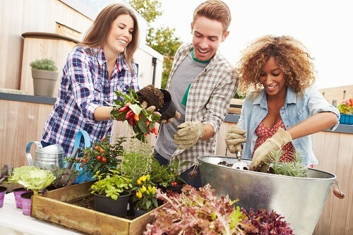 Letting The Specialists Look after Your Conway Landscaping