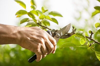Lawn Care Guide To Pruning Your Plants