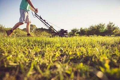 Your Eco-Friendly Lawn Care and Maintenance Options