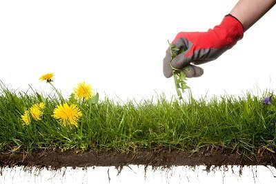 Most Common Questions About Top Dressing Your Lawn