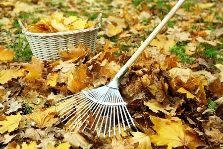 Three-Step Fall Lawn Care Guide