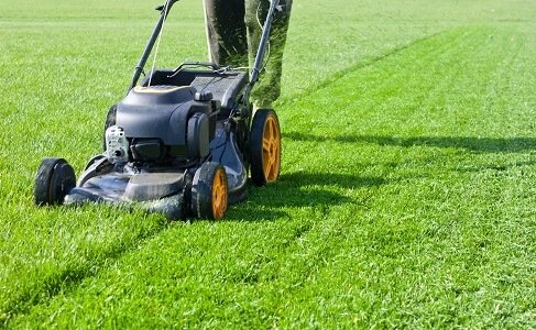 Basics of Lawn Maintenance