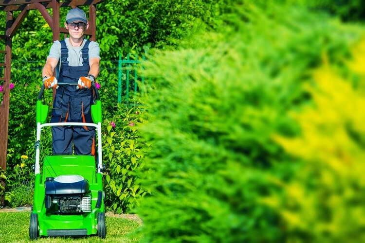The Ultimate Lawn Care Guide For Every Homeowner