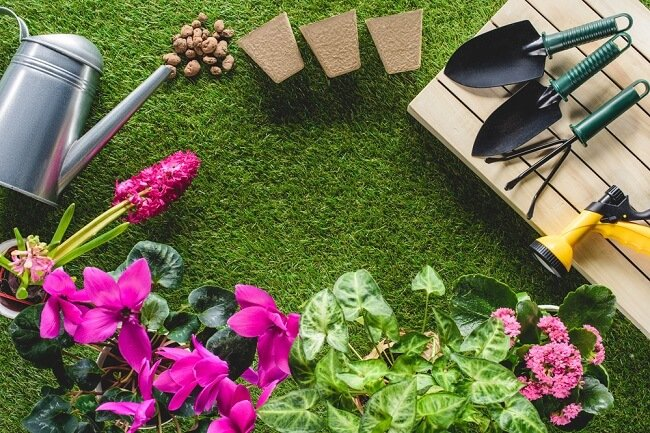 Lawn Care Guide on Insect Control