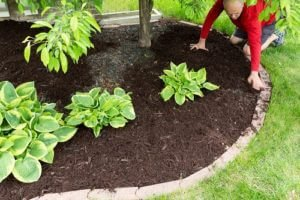 Protect Your Plants And Keep Them Warm Through Mulching