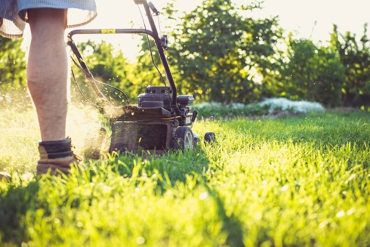 Lawn Care Guide To Mowing After Rain