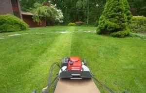 Basic Lawn Maintenance Tips For Every Type of Lawn