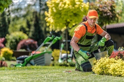Your Guide in Finding the Right Lawn Care Professionals