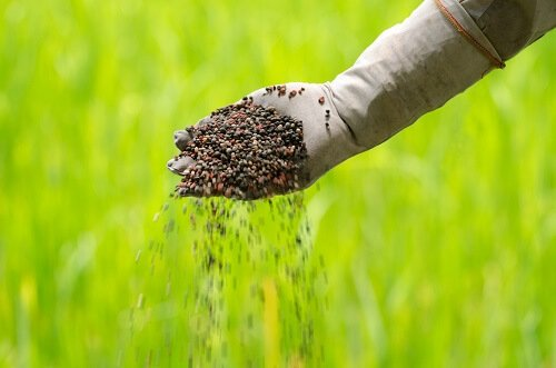 Why You Should Fertilize Your Lawn In The Fall