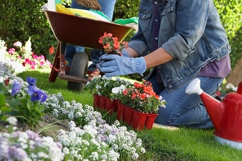 Lawn Care Guide On Your Plants Nitrogen Sources